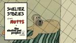 Shelter Stories - Shemp